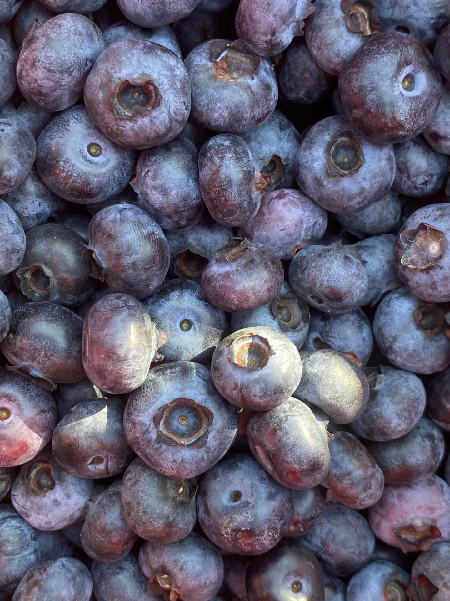 Curious where to go blueberry picking in Los Angeles? Los Angeles blogger My Teacher Got Style is sharing where, why and how to go blueberry picking this season!